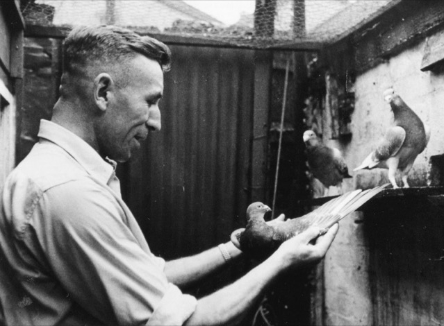 Harry the pigeon fancier